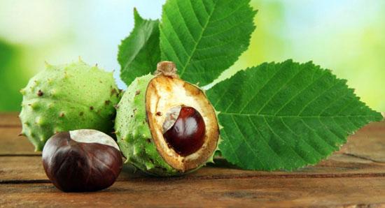 horse-chestnut-varicose-veins