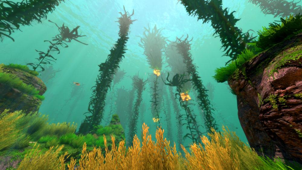kelp_forest